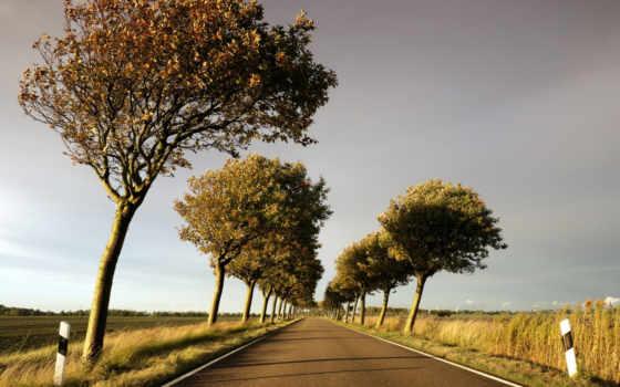 пейзажи -, trees, дорога, канал, мельницы, голандия, туман, дек,