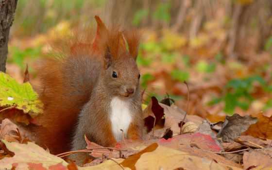 осень, еще, природы