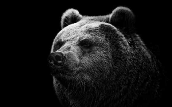 медведь, донбасс, nezalezhnost, клавиатура, shortcut, нос, grizzly, ukrainian, убийца, terorist, separatist