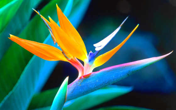 рай, птица, цветы, flowers, birds, природа,