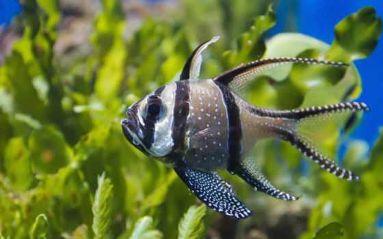 коллекциях, рыбки, аквариумные