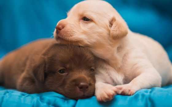 cute, puppies, сладкое, вконтакте, найти,