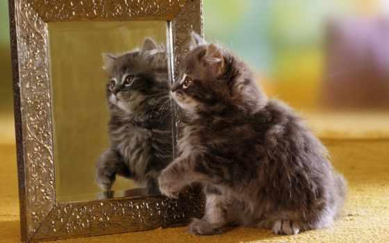 зеркало, отражение, кот, котенок, оригинал