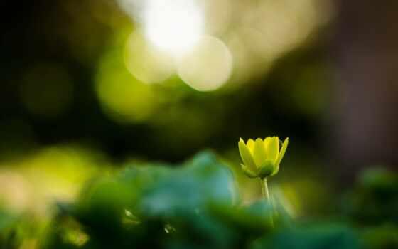 уж, loaded, best, цветы, lotus, листьев, зелёный, cvety, макро, их