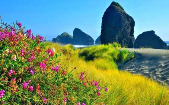 цветы, пляж, california, взлёт, rosa, californica, fond, заставка, видов, wild