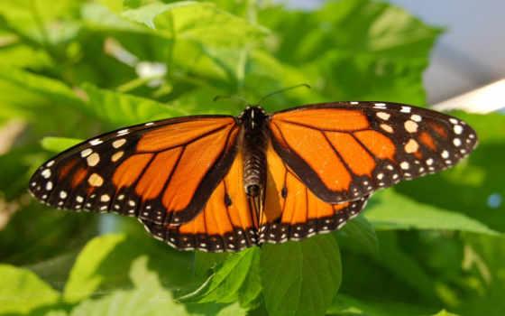 бабочка, листва