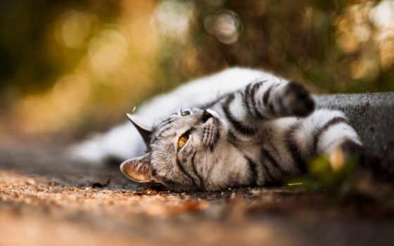 кот, усы