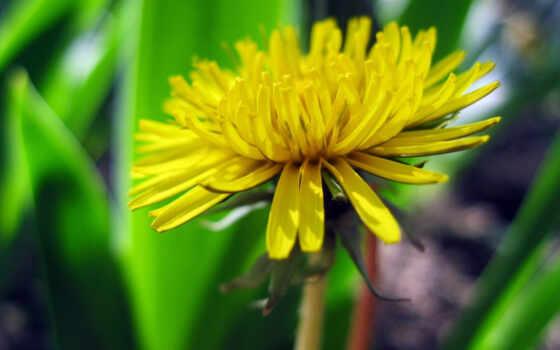 цветами, фотографии, яркие