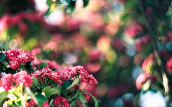 цветы, розовые, столы
