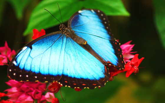 бабочки, бабочек, телевизоры