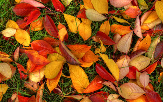 листва, осенние, природа