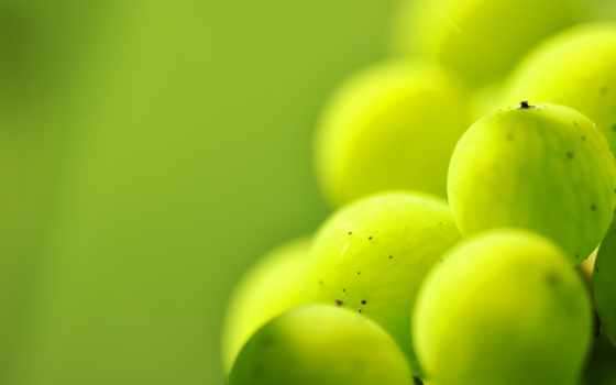 фон, капли, зелёный, photos, color, vectors, крыжовник, ягода, прожилки,