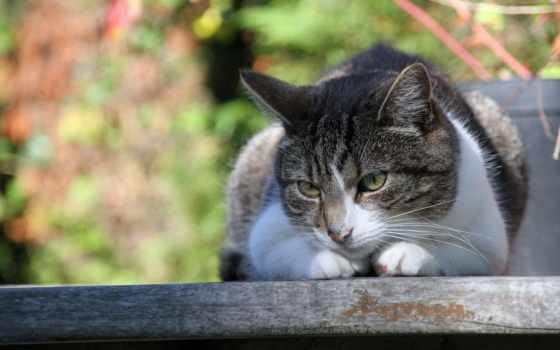 summer, кот, bilder, katze, tiere, hintergrundbild, кошки, und, природа,