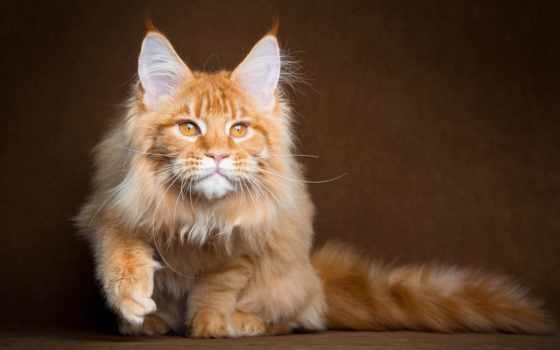 mein, kun, red, кот, коты,