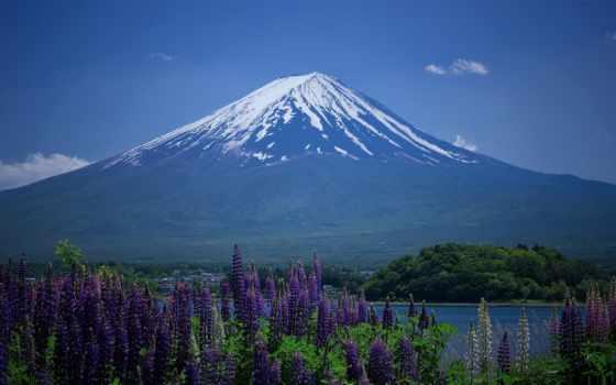 страница, фудзияма, гора, imgator, montagne, люпины, mike, горы, природа,