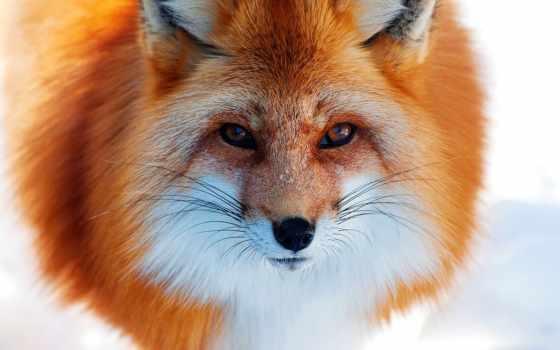 zhivotnye, лесу, зимнем, животных, леса, liveinternet, обсуждение, зимнего,