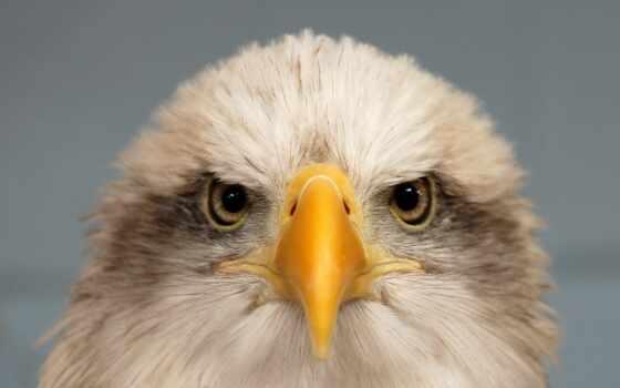 орлан, id, fly, взгляд, winter
