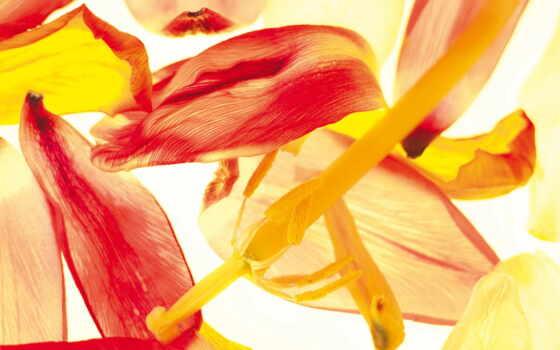 samsung, flowers