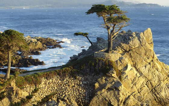 california, beach, pebble, lone, cypress, the, пеб
