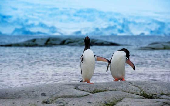 пингвины, берег, антарктида