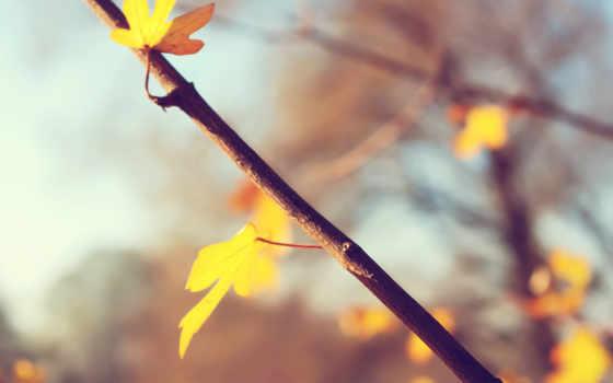 природа, art, листья