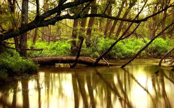 swamp, природа, пейзажи -, лесов, лесное, trees, обоях, water, дерево, landscape,