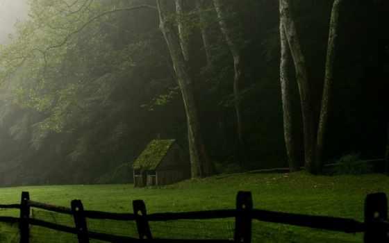 изьба, лес, лесу, природа, linkedin, weddle, автор, pin, jacqueline, rays, озеро,
