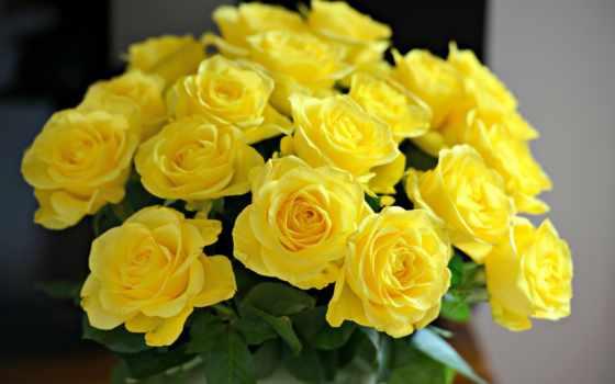 розы, желтые, букет, жёлтых, cvety, роз,