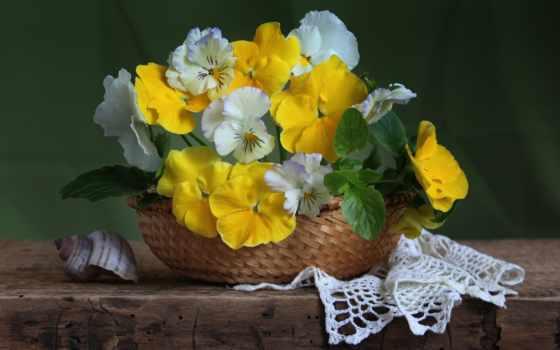 cvety, красивые, bom, dia, комментарий, порою, feliz,