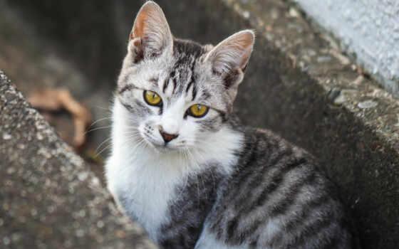 кот, картинка, kitty, котенок, взгляд, тематика, смотреть