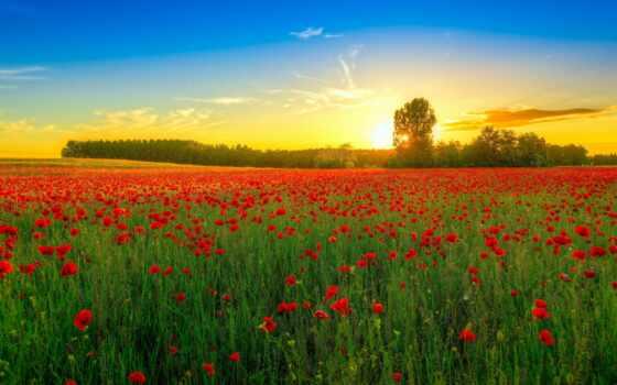 природа, поле, цветы, landscape, небо, коллекция