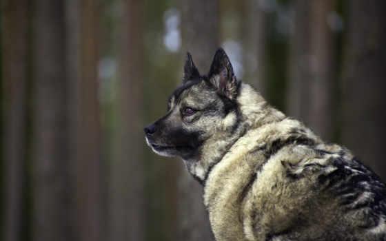 dog, собаки