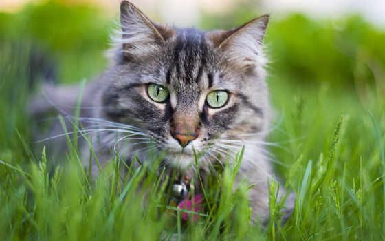 кот, трава