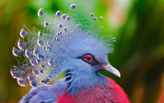 птица, перья, голубь, water, крылья,