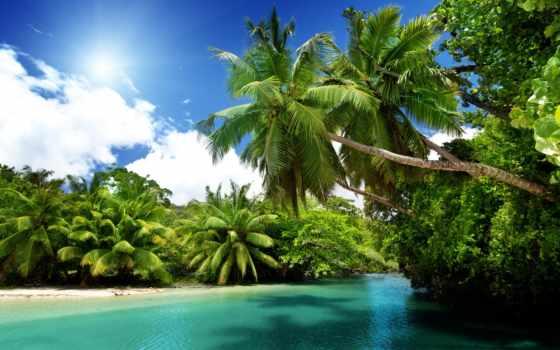 пальмы, тропики, море, природа, пляж, ocean, sun, blue,