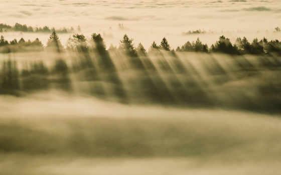 ,лес,дымка,туман,закат,