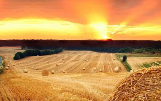 солома, сено, поле, стог, trees, sun, закат, дорога,