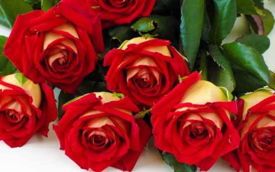 para, tarjetas, con, rosas, cumpleaños, frases, flores, amor, feliz, facebook, postales,