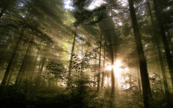 лес, rush, песнь, band, цитата, quotes, youtube, канадский, pinterest,