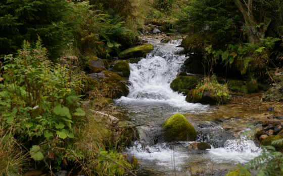 trees, река, лес, природа, пейзажи -, getbg,