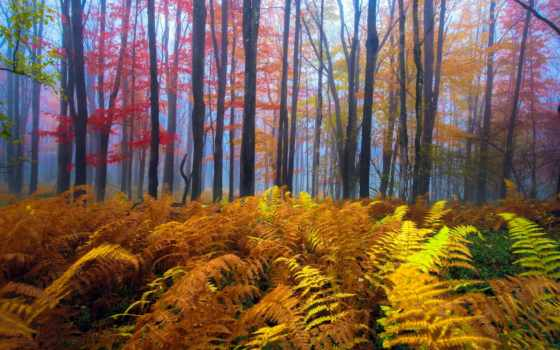 осень, папоротник, лес, листва, west, леса, осенней, опушке, растет, trees,