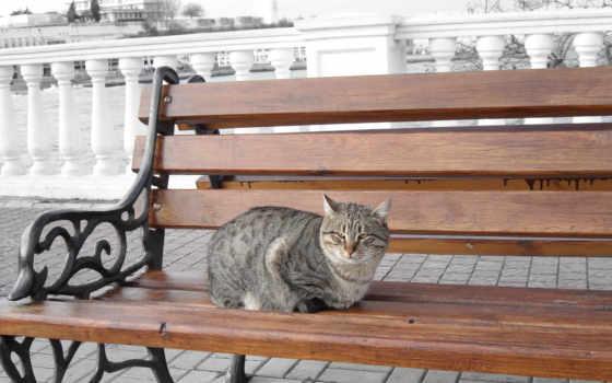 кот, улица, сидит, городе, скамье, скамейка,