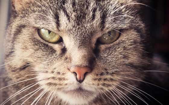 кот, усы, морда, кота,