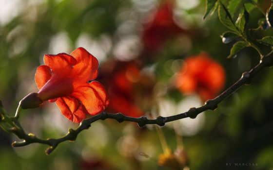 iphone, цветочная, красавица