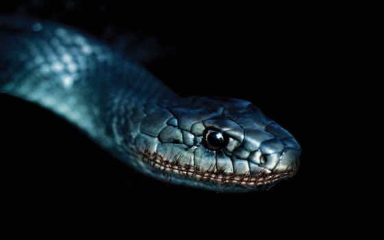 snake, пиздеть, песочница