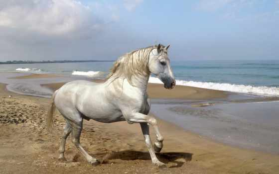 лошадь, белая, от