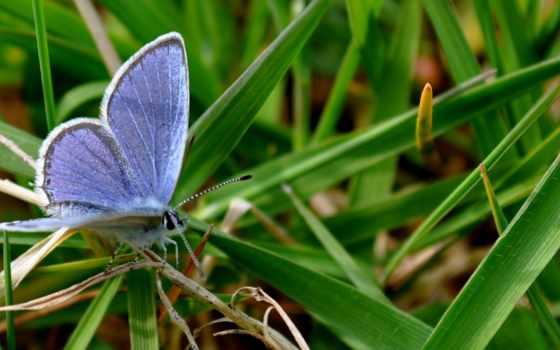 ecran, природа, papillon