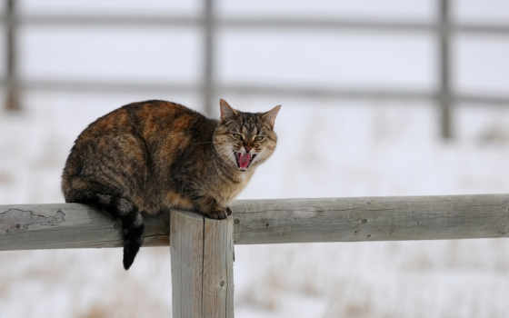 кот, winter, снег, cats, забор,
