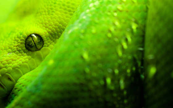 snake, зелёный, free