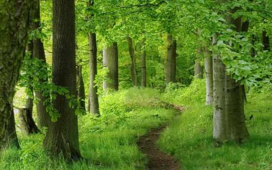 тропинка, woods, лес, зелёный, avea, wood,
